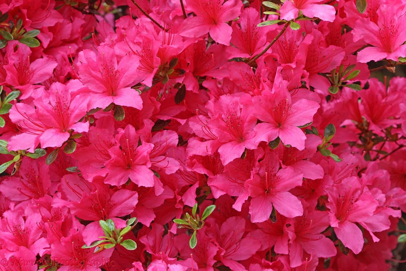 Plant Wallpaper Plant Wallpaper Aesthetic