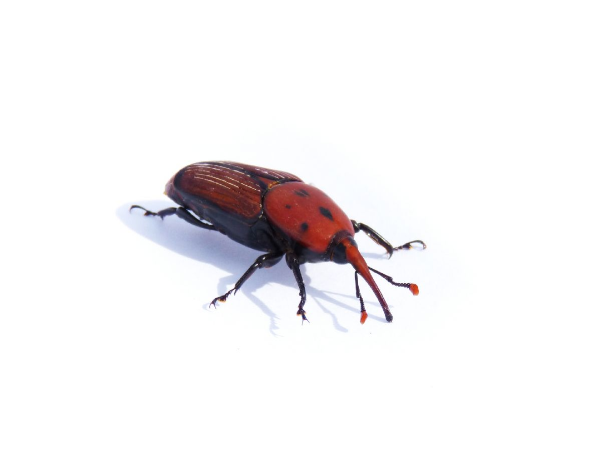 Dream Interpretation: what the beetle is dreaming about