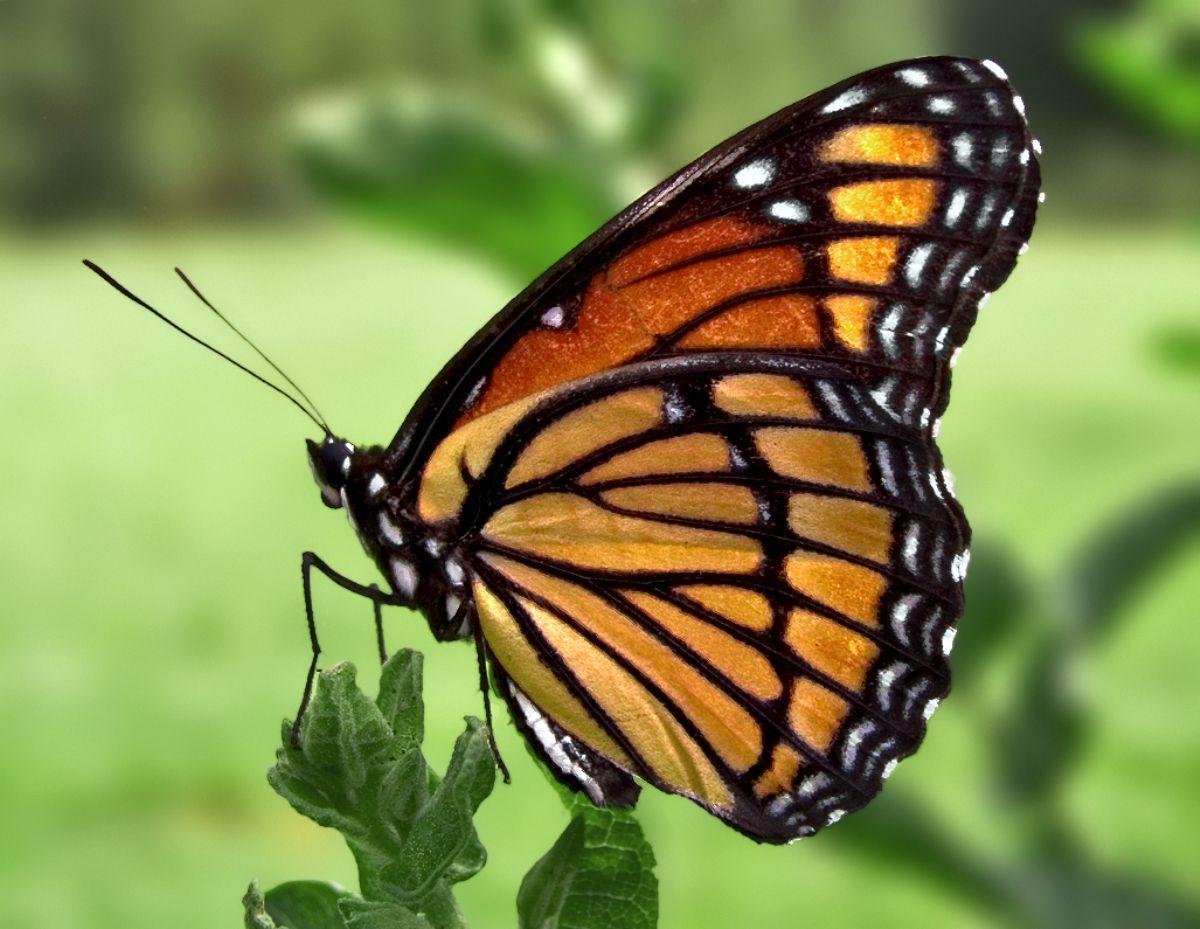 What dreams butterfly Interpretation popular dreaming 12