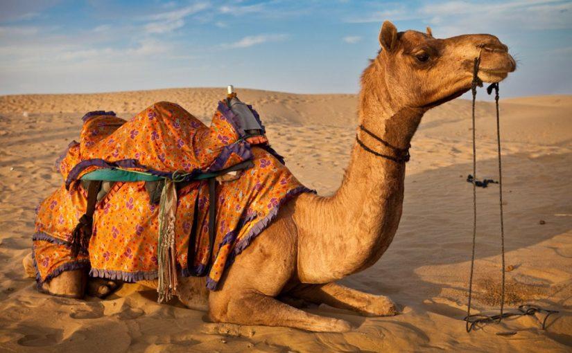 Dream Meaning of Camel