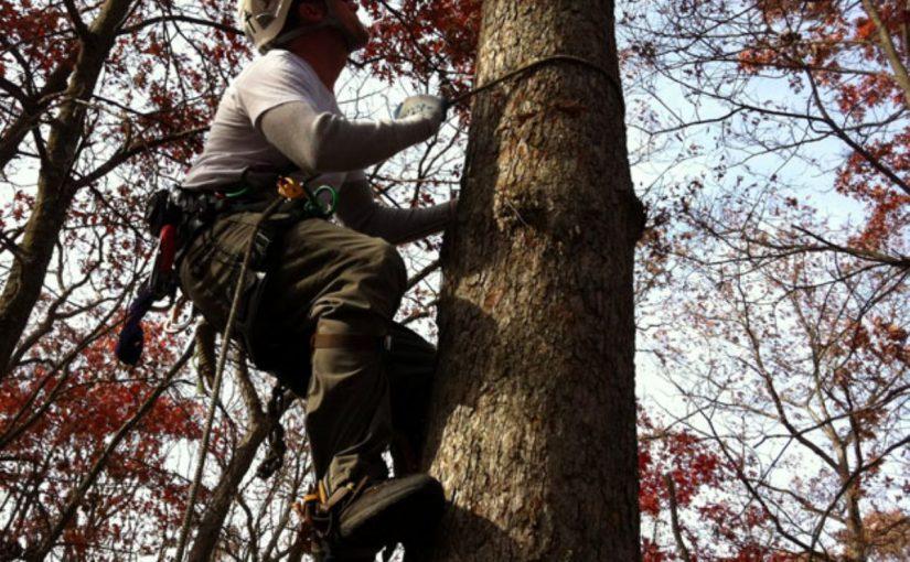 Dream Meaning of Climbing A Tree - Dream Interpretation