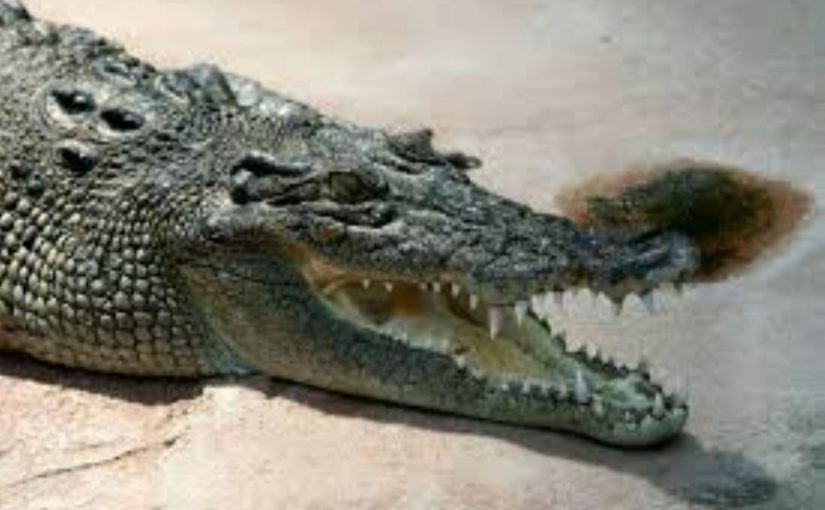Dream Meaning of Crocodile