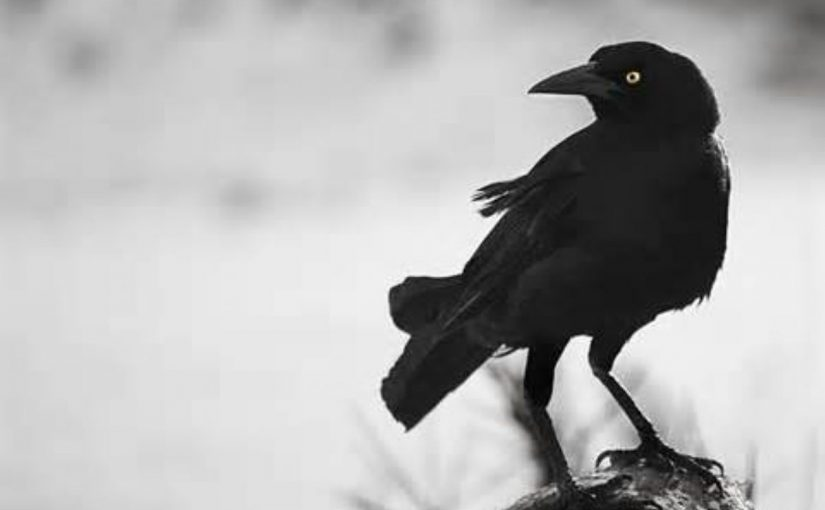 Dream Meaning of Crow