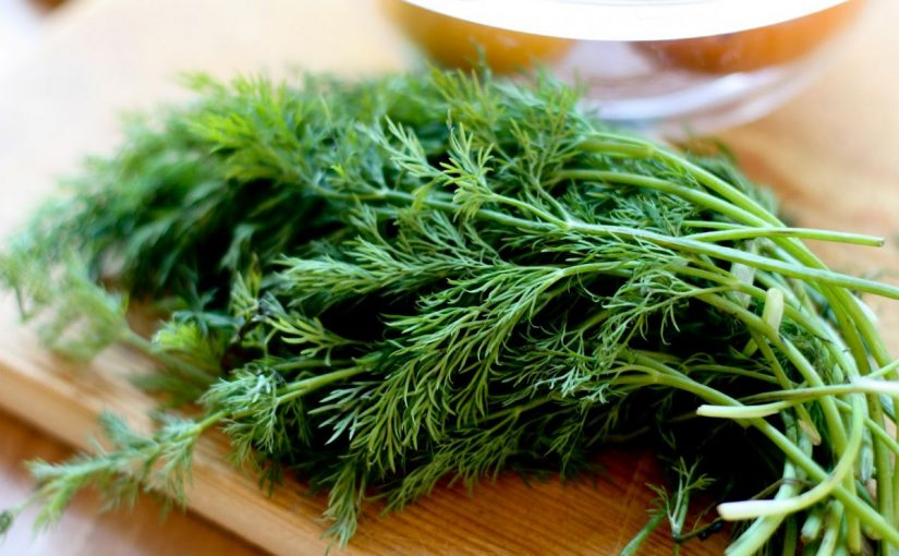 Dream Meaning of Dill