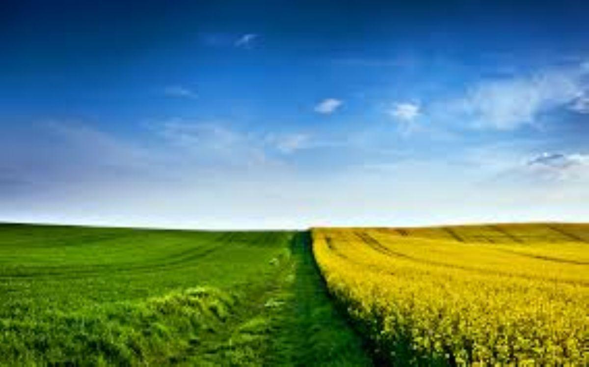 Dream Interpretation: the field what dreams 95