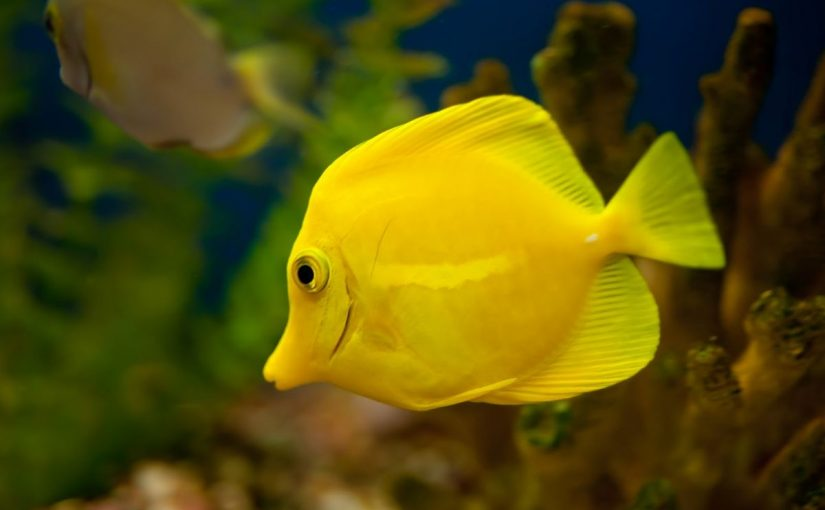 Dream meaning of fish dream interpretation for Fish dream meaning