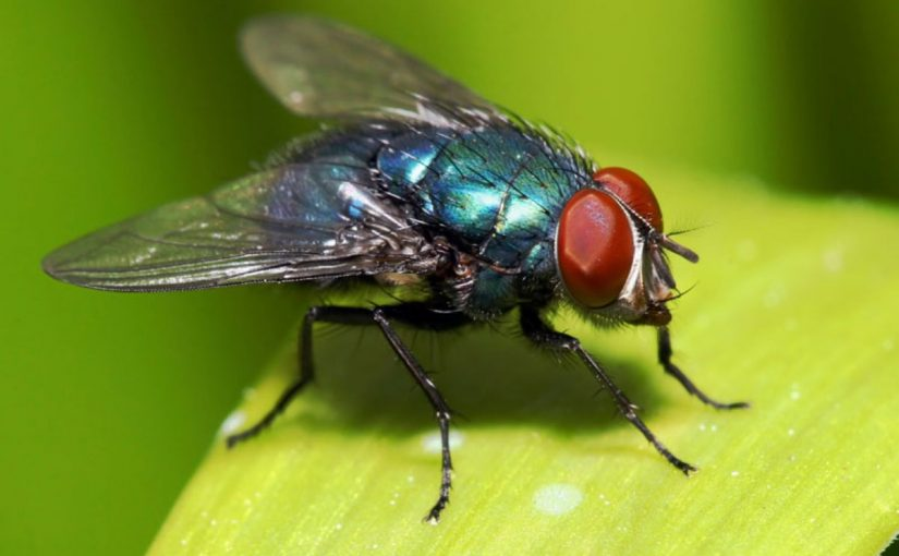 Dream Meaning of Fly