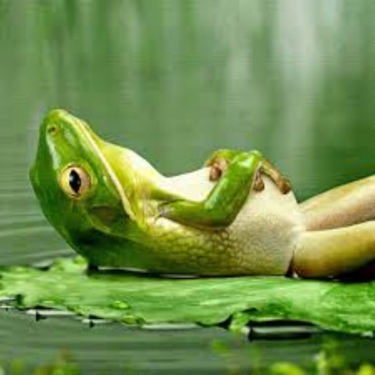 What does the frog dream about