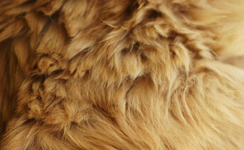 Dream Meaning of Fur