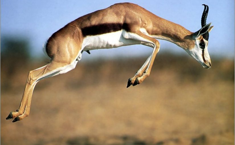 Dream Meaning of Gazelle