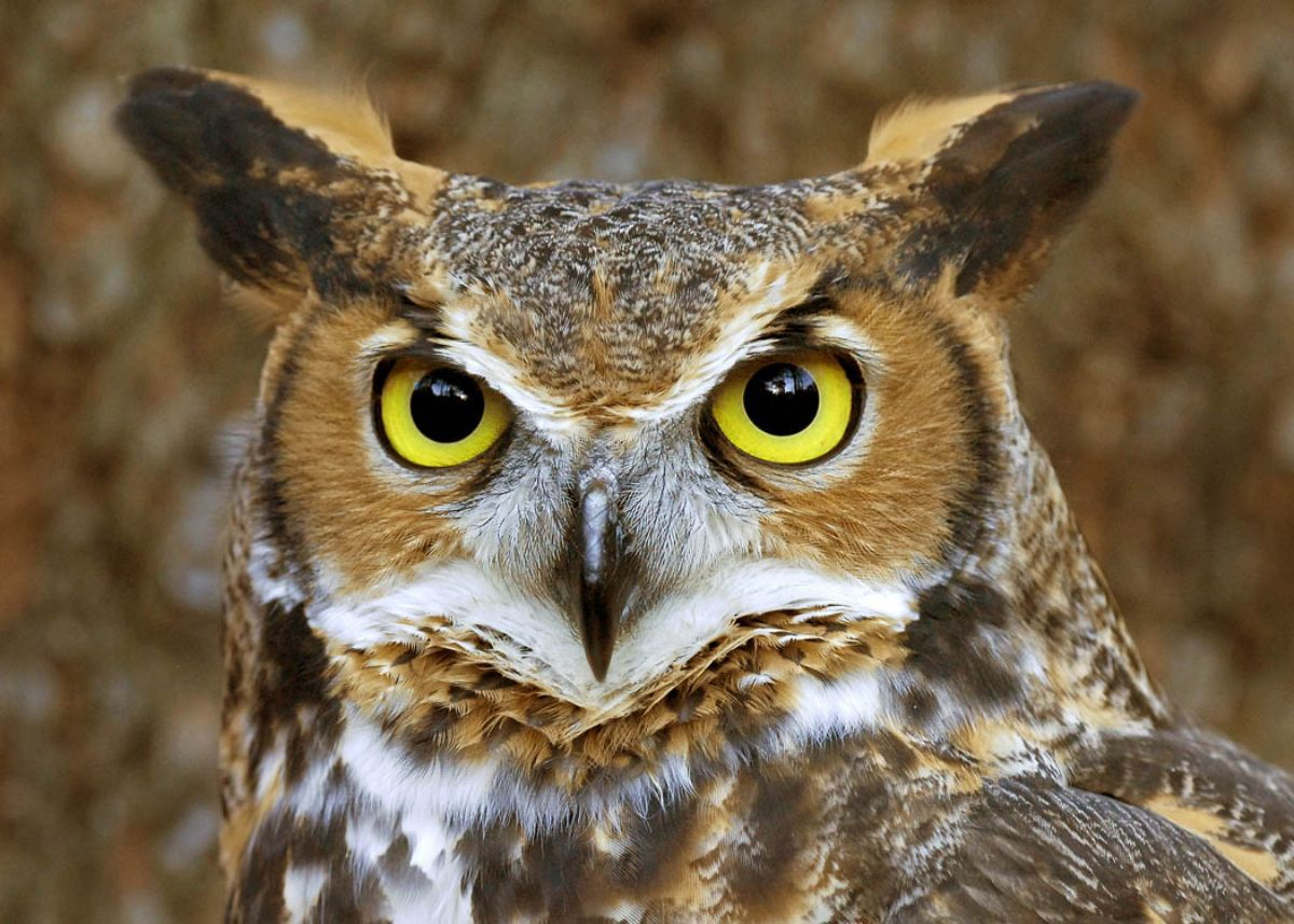 Dream Interpretation: What Owls Dreamed About
