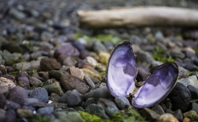 Dream Meaning of Oyster