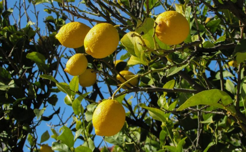Dream Meaning Of Picking Lemon