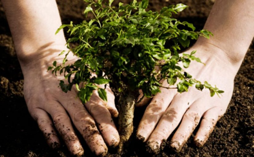 Dream Meaning of Planting Trees
