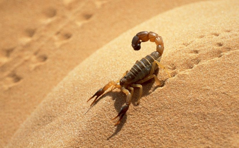 Dream Meaning Of Scorpion Dream Interpretation