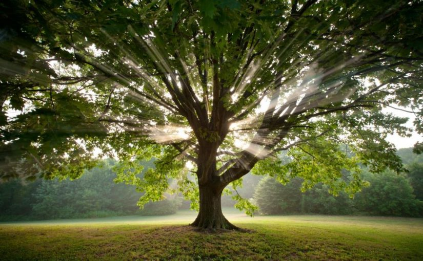 Dream Meaning of Tree
