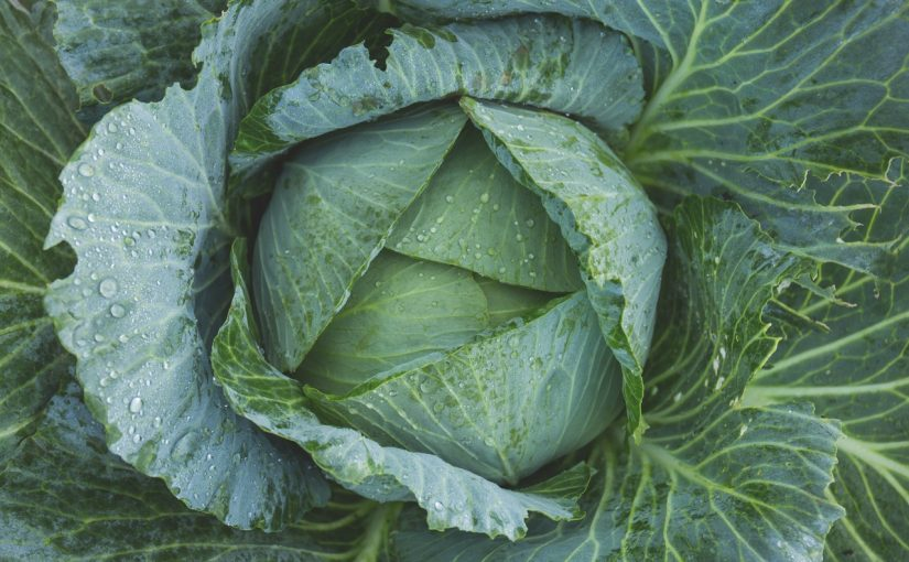 Dream Meaning of Cabbage