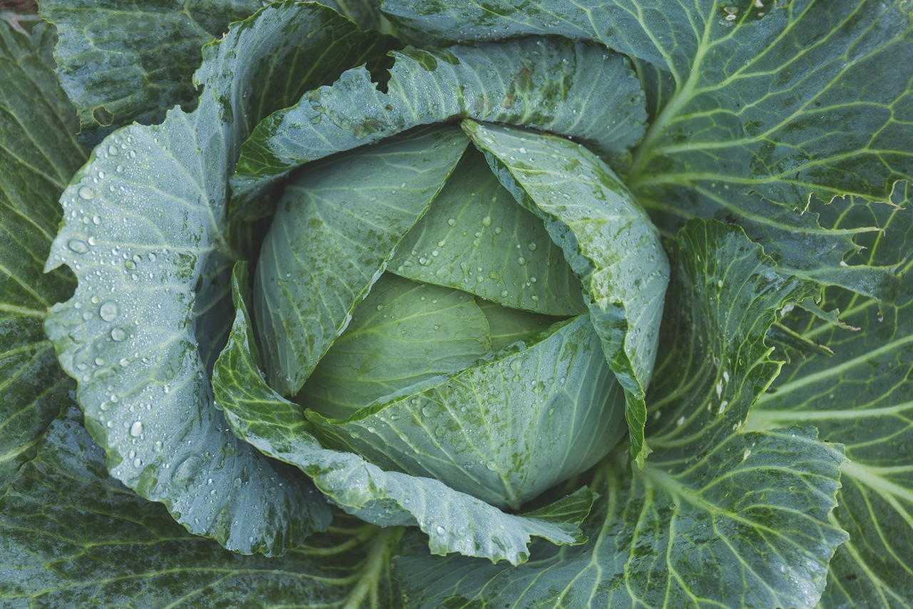 Dream Interpretation: what dreams of cabbage 12