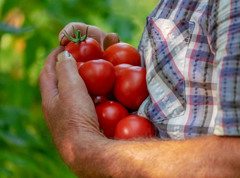 Dream Meaning of Tomatoes - Dream Interpretation