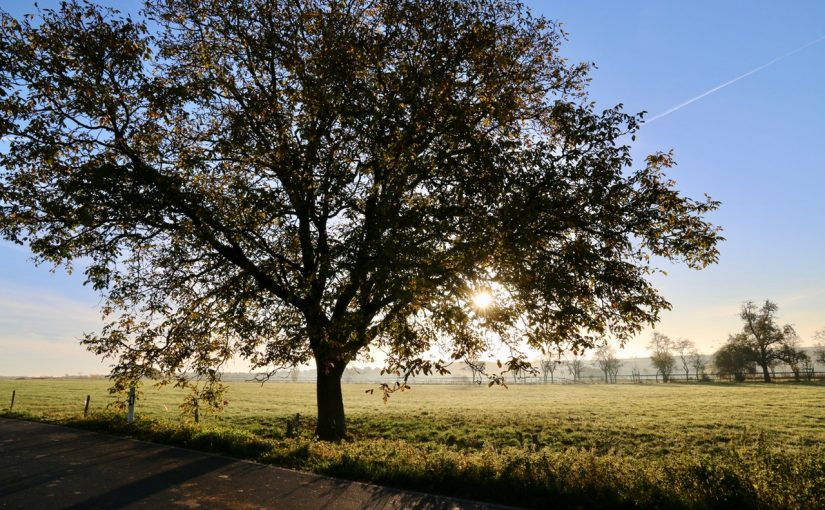 Dream Meaning of Oak Tree