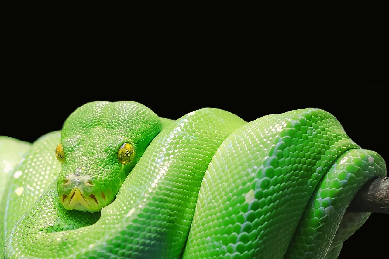 Dream Meaning of Snake - Dream Interpretation