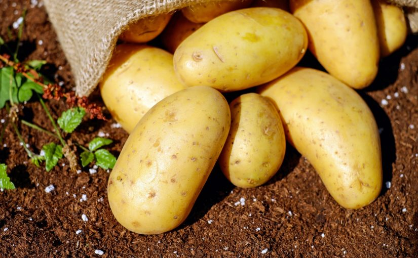 Dream Meaning of Potato