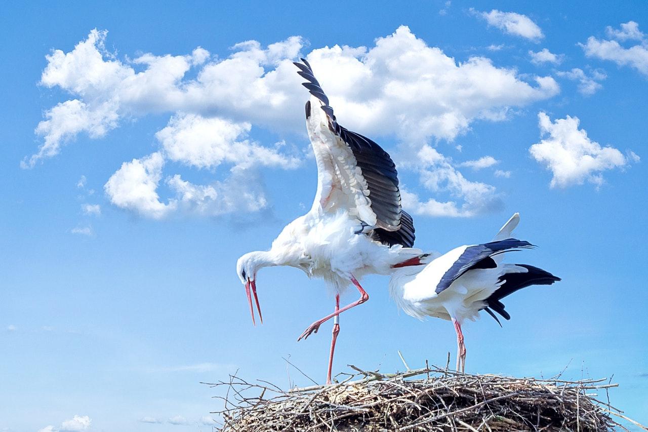 What dreams of a stork Interpretation of dreams 51